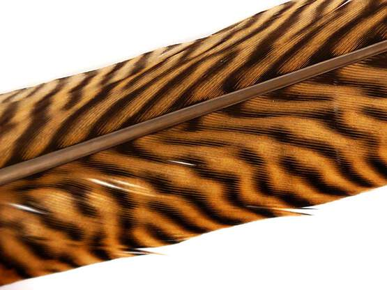 GOLDEN PHEASANT TAIL FEATHER 1° CLASS hotfly - 1 pc. -...