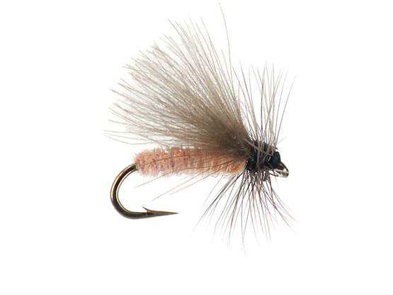 G1 Grayling CDC - Salmon