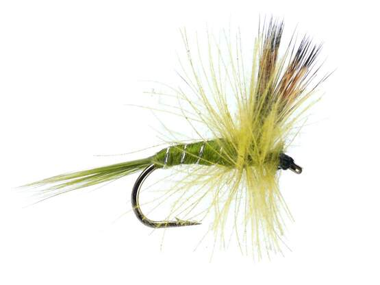 CDC Dry Pale Olive