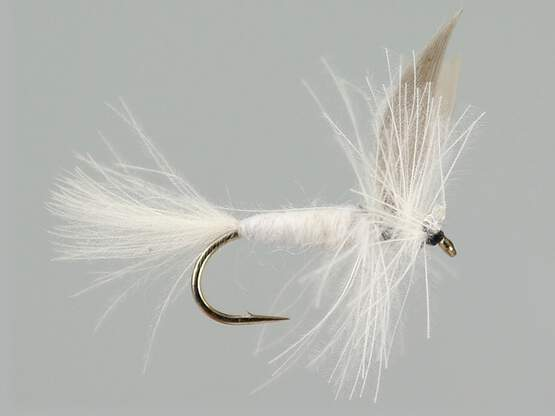 CDC White Winged Dry