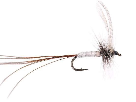 White Long Tailed Mayfly